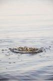 Νερό ψεκασμού στον ποταμό Στοκ Εικόνες