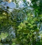 Νερό Cenote Στοκ φωτογραφία με δικαίωμα ελεύθερης χρήσης