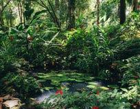 Νερό lillies, Nymphaeaceae, στο τροπικό τροπικό δάσος Στοκ εικόνες με δικαίωμα ελεύθερης χρήσης