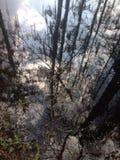Νερό ripplesw Στοκ Εικόνες