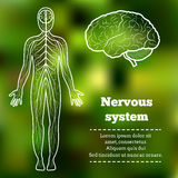 Νευρικό σύστημα ανθρώπινου σώματος Στοκ εικόνα με δικαίωμα ελεύθερης χρήσης