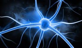 νευρώνας Στοκ Φωτογραφίες