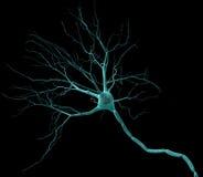 νευρώνας Στοκ εικόνες με δικαίωμα ελεύθερης χρήσης