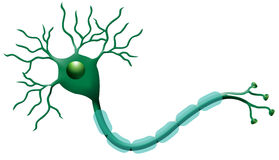 νευρώνες Στοκ φωτογραφίες με δικαίωμα ελεύθερης χρήσης