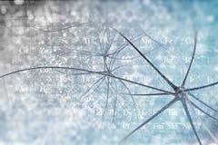 νευρώνες ελεύθερη απεικόνιση δικαιώματος