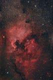 Νεφέλωμα της Βόρειας Αμερικής Στοκ εικόνα με δικαίωμα ελεύθερης χρήσης