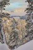 Νεφελώδες βουνό μέσω του χειμώνα δέντρων Στοκ Φωτογραφία