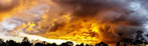 Νεφελώδες λυκόφατος ουρανού πανοράματος χρυσό και sihouette δέντρων Στοκ φωτογραφία με δικαίωμα ελεύθερης χρήσης