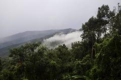 Νεφελώδες πρωί με την ομίχλη που είναι εξαπλωμένη στα δέντρα στο δάσος στοκ εικόνες