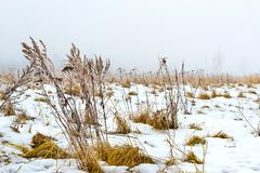 Νεφελώδες χειμερινό πρωί ομίχλης χιονώδης χειμώνας τοπίων Στοκ φωτογραφίες με δικαίωμα ελεύθερης χρήσης