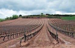 νεφελώδες rioja Λα ημέρας wineyard Στοκ Φωτογραφία