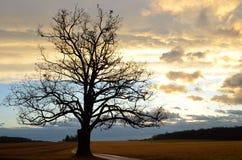 Νεφελώδης ανατολή με τη σκιαγραφία του μεγάλου παλαιού δρύινου δέντρου κατά μήκος μιας αγροτικής κίνησης σε ένα γυμνό χειμερινό π στοκ εικόνες με δικαίωμα ελεύθερης χρήσης