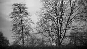 Νεφελώδης ημέρα στο δάσος στοκ εικόνες