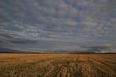Νεφελώδης καιρός και σύννεφα, κεκλιμένος τομέας σίκαλης στοκ εικόνα με δικαίωμα ελεύθερης χρήσης