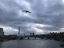 Νεφελώδης ουρανός με το πουλί που πετά πέρα από τον ποταμό Τάμεσης πόλεων του Λονδίνου με τα ορόσημα στο υπόβαθρο στοκ φωτογραφία