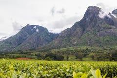 Νεφελώδης ουρανός με το υποστήριγμα Mulanje και τις φυτείες τσαγιού στοκ φωτογραφίες με δικαίωμα ελεύθερης χρήσης