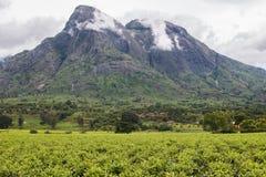 Νεφελώδης ουρανός με το υποστήριγμα Mulanje και τις φυτείες τσαγιού στοκ εικόνα