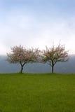 νεφελώδη γκρίζα δέντρα δύο Στοκ εικόνα με δικαίωμα ελεύθερης χρήσης