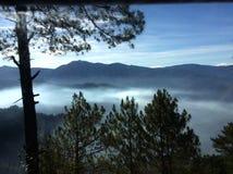 Νεφελώδη δέντρα πεύκων Στοκ φωτογραφίες με δικαίωμα ελεύθερης χρήσης