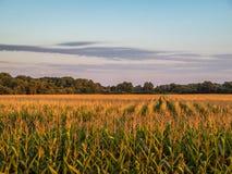 Νεφελώδες ηλιοβασίλεμα 2 πέρα από τον αγροτικό αγροτικό τομέα συγκομιδών καλαμποκιού στοκ εικόνα με δικαίωμα ελεύθερης χρήσης