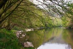 Νεφελώδες τοπίο άνοιξης του παλαιού δέντρου φθινοπώρου κοντά στη λίμνη Στοκ Φωτογραφία