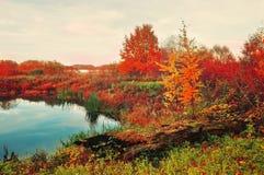 Νεφελώδης δασικός και μπλε ποταμός φθινοπώρου φθινοπώρου στον ομιχλώδη καιρό - άποψη τοπίων Στοκ εικόνα με δικαίωμα ελεύθερης χρήσης