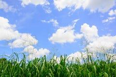 νεφελώδης ουρανός χλόης στοκ φωτογραφία
