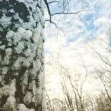 νεφελώδης Στοκ φωτογραφίες με δικαίωμα ελεύθερης χρήσης