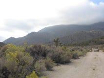 Νεφελώδη βουνά στην έρημο της Καλιφόρνιας Στοκ Εικόνες