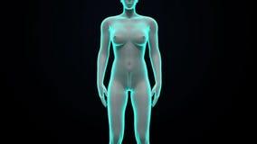 Νεφρά ανίχνευσης στο θηλυκό σώμα των ακτίνων X άποψη απεικόνιση αποθεμάτων