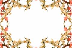 νεφρίτης κερασιών 12 ανθών Στοκ φωτογραφία με δικαίωμα ελεύθερης χρήσης