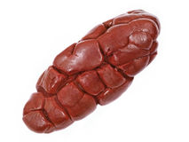 Νεφρό βόειου κρέατος. Απομονωμένος. Στοκ εικόνα με δικαίωμα ελεύθερης χρήσης