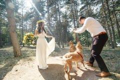 Νεόνυμφος με τη νύφη και το σκυλί Στοκ Εικόνα