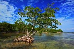 Νησάκι δέντρων μαγγροβίων που αντιμετωπίζεται από την επιφάνεια νερού, Bbrown, κινηματογράφηση σε πρώτο πλάνο, πλάσμα, κίνδυνος,  Στοκ Εικόνα