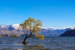 Νησί δέντρων Wanaka λιμνών Στοκ φωτογραφίες με δικαίωμα ελεύθερης χρήσης