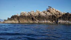 Νησί βρωμών Στοκ Εικόνες