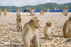 Νησί πιθήκων Ταϊλάνδη Στοκ φωτογραφία με δικαίωμα ελεύθερης χρήσης