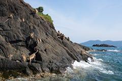 Νησί πιθήκων Στοκ Εικόνες