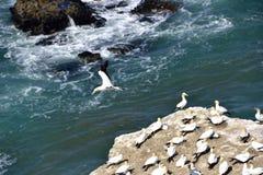 Νησί πουλιών Στοκ φωτογραφίες με δικαίωμα ελεύθερης χρήσης