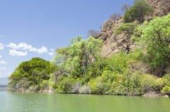 Νησί στη λίμνη Baringo στην Κένυα. Στοκ Φωτογραφίες