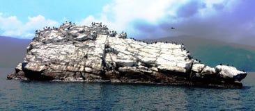 Νησί του εθνικού πάρκου Mochima πουλιών venezuelan Στοκ Φωτογραφίες