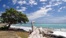 Νησί του Τομπάγκο - παραλία Roxborough - τροπική παραλία του Ατλαντικού Ωκεανού Στοκ φωτογραφία με δικαίωμα ελεύθερης χρήσης