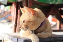 Νησί φυλάκων γατών στοκ εικόνα με δικαίωμα ελεύθερης χρήσης