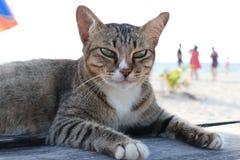 Νησί φυλάκων γατών στοκ φωτογραφία