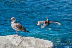 Νησί Capraia, εθνικό πάρκο Arcipelago Toscano, Τοσκάνη, Ιταλία Στοκ Φωτογραφίες