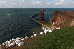 Νησί Helgoland, Γερμανία Στοκ Εικόνες