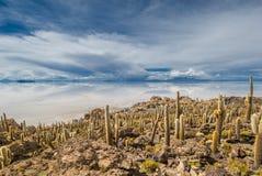 Νησί Incahuasi, Salar de Uyuni, Βολιβία Στοκ φωτογραφία με δικαίωμα ελεύθερης χρήσης