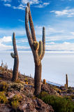 Νησί Incahuasi Salar de Uyuni boleyn Στοκ Εικόνες