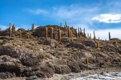 Νησί Incahuasi, Uyuni αλατούχο Salar de Uyuni, Aitiplano, Βολιβία Στοκ Φωτογραφίες