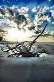 Νησί Jekyll παραλιών Driftwood, Γεωργία Στοκ εικόνα με δικαίωμα ελεύθερης χρήσης